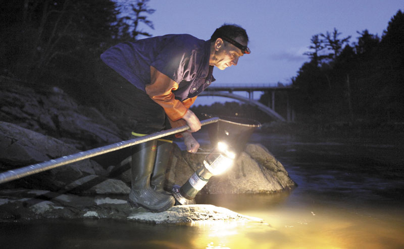 Bruce Steeves uses a lantern while dip netting for elvers on a river in southern Maine. Elvers are young, translucent eels that are born in the Sargasso Sea and swim to freshwater lakes and ponds where they grow to adults before returning to the sea. This year, they are going for about $2,000 a pound.