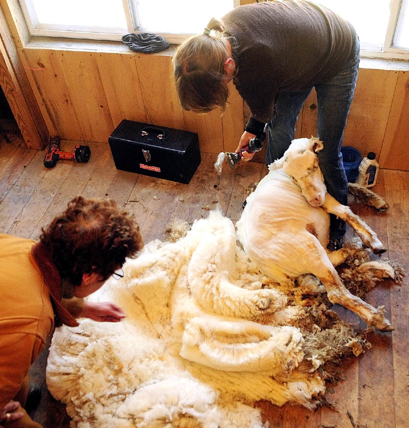 Betty Stover, left, checks out a fleece after Gwen Hinman finished shearing one of her sheep at Spinnakees Farm on Friday in Augusta.