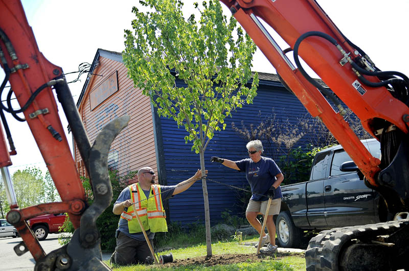 Gardiner city employee Dan Robideau and Joan Vining plant a maple tree Monday in downtown Gardiner. Vining and other members of the Gardiner Conservation Committee helped city workers plant 18 new trees throughout the city.