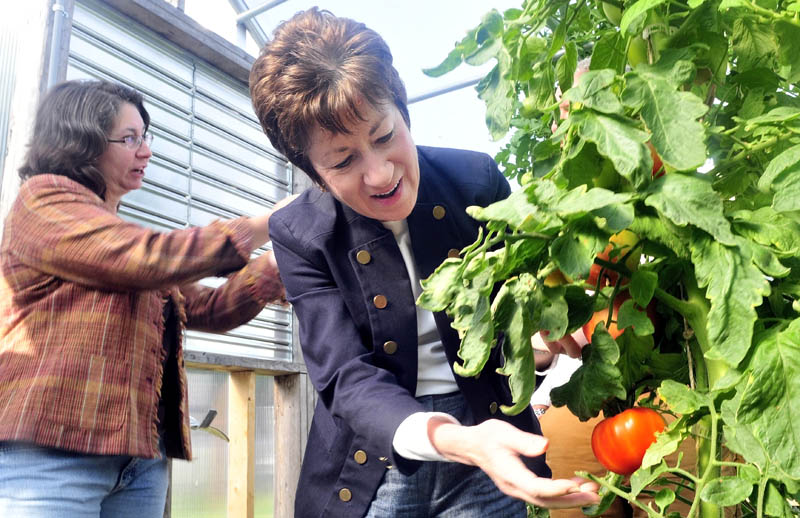 SEEDS OF SUCCESS: Sen. Susan Collins examines a variety of tomato growing in one of the trial greenhouses at Johhnny's Selected Seeds Research farm in Albion as Wendy Reinemann, left, leads a tour on Tuesday.