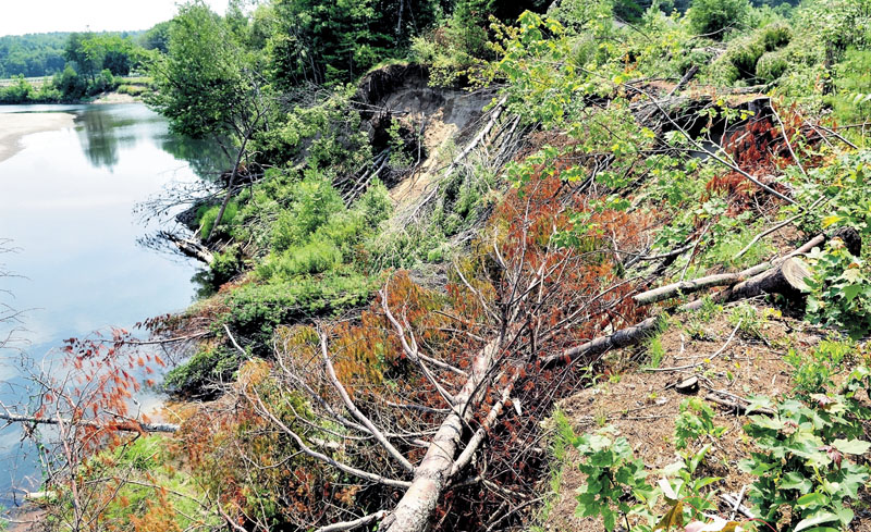 Trees have been cut down in an effort to help stabilize erosion between Whittier Road and Sandy Stream in Farmington. Town officials are hoping that a winter freeze will help stabilize an eroding riverbank that threatens part of the road.