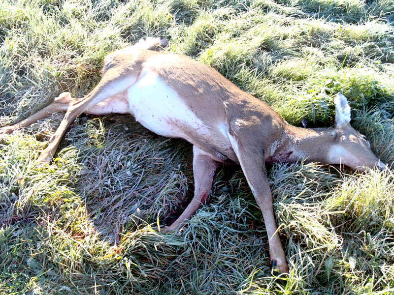 State police and the warden service are looking for help in solving a poaching case in St. Albans that left two deer dead Monday.