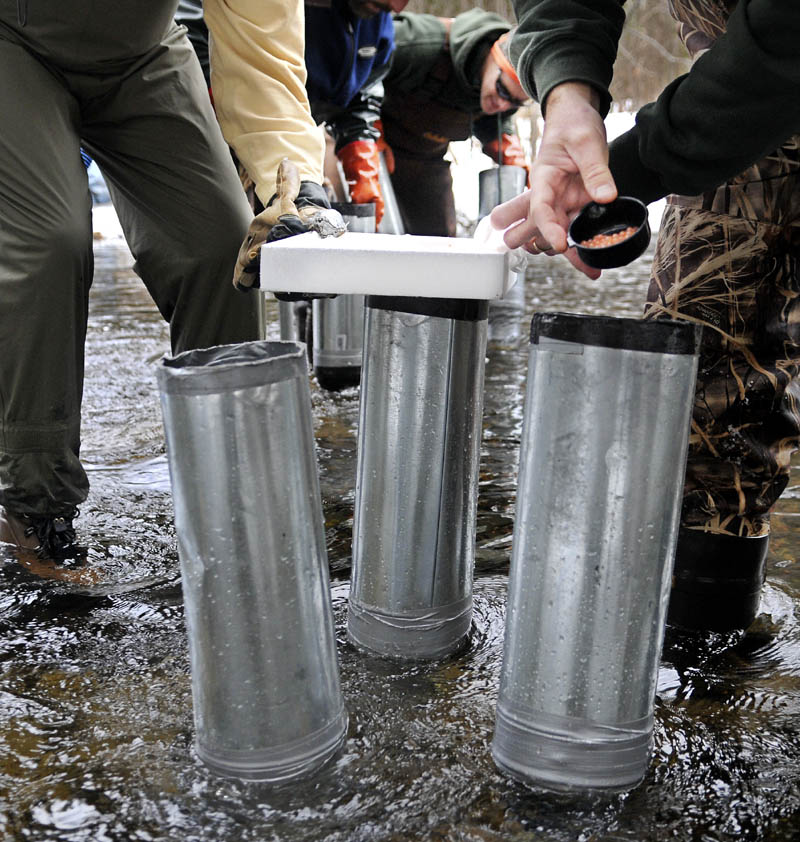 Department of Marine Resources biologists place fertilized Atlantic salmon eggs into a standpipe Tuesday, which was inserted into the bottom of the Sheepscot River in Palermo with a hydraulic planter.