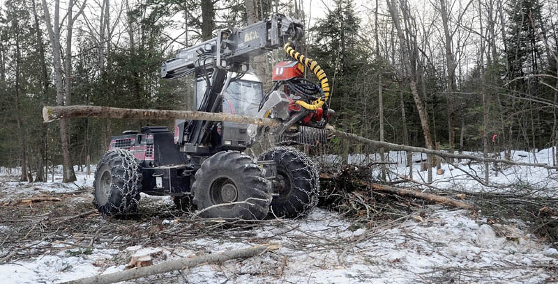 Scott Kinney cuts and limbs trees with a harvester in a select-cut operation on Trafton Road in Sidney Thursday. Kinney Brothers Logging specializes in sustainable land use logging techniques.