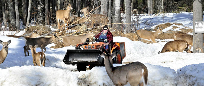 Basil Powers spreads corn from his tractor for the deer that show up daily for grain at his farm in Coplin Plantation.
