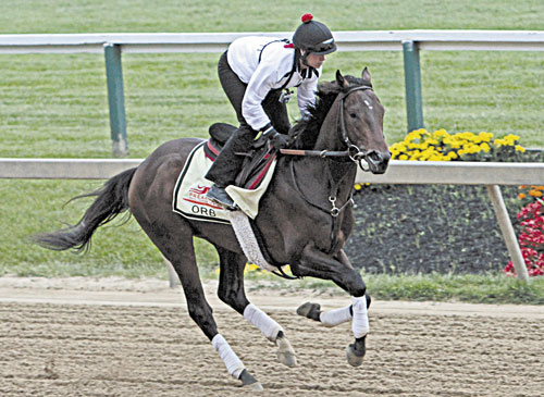 HERE WE GO: Exercise rider Jenn Patterson gallops Kentucky Derby winner and Preakness Stakes favorite Orb on Thursday at Pimlico Race Course in Baltimore.