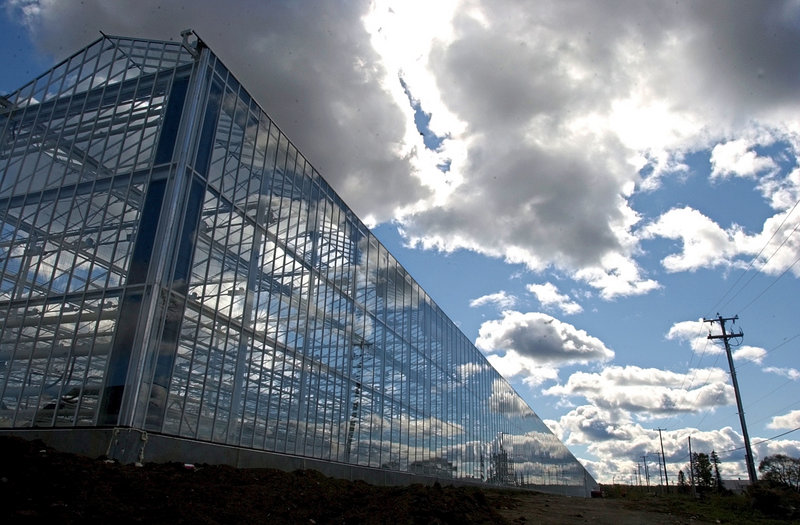 This 2006 file photo shows a greenhouse at Backyard Farms, a major tomato grower in Madison.