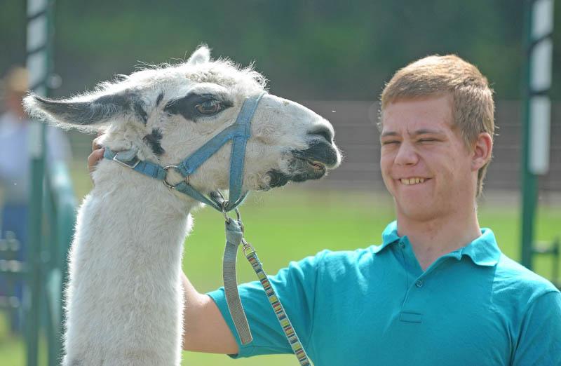 Daniel Dalton, 18, of Harmony, handles Leonard, a llama from the Chadbourne's farm, at the Harmony Free Fair today.