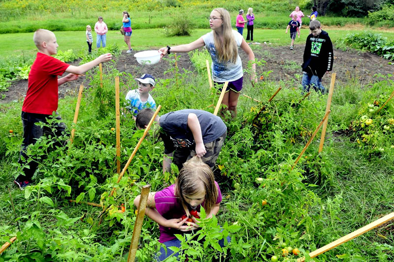 Mill Stream Elementary School student Wyatt Lancaster hands tomatoes to Tasha Foss as Savannah Lancaster picks more in a community garden in Norridgewock on Thursday. The kids harvested the produce that will go to the Norridgewock Warming Center.