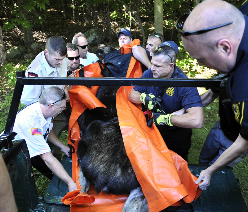 Game Wardens, biologists, Augusta firefighters and police lug a yearling bull moose into the back of a pickup truck Wednesday after it was tranquilized in an Augusta neighborhood. The moose, weighing an estimated 600 pounds, was moved from the Ganneston neighborhood of the city and released unharmed in the Alonzo Garcelon Wildlife Management Area in Augusta.