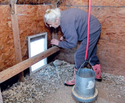 RATS: Jean Mosher inspects the work she did to plug a hole that she said rats made in a wooden wall to get into her chicken house at her home in Smithfield.