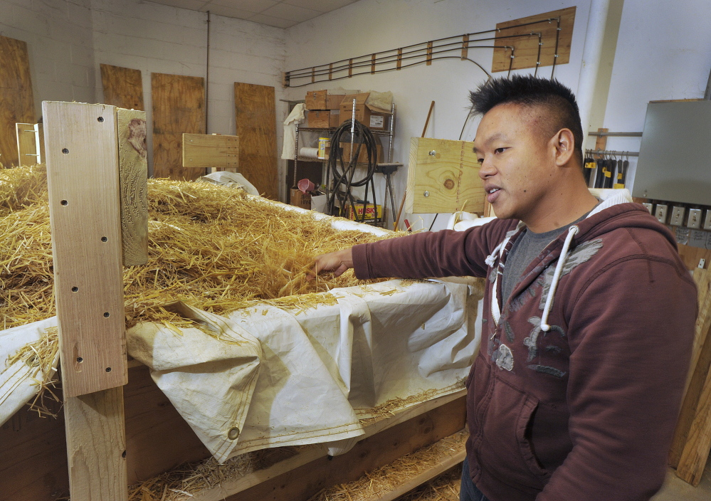 Bountiful Mushrooms Farm co-owner Khanh Le explains the process of converting wheat straw into a medium in which to grow oyster mushrooms: The straw is chopped up, soaked in water and then dried and pasteurized before adding the mushroom spawn.