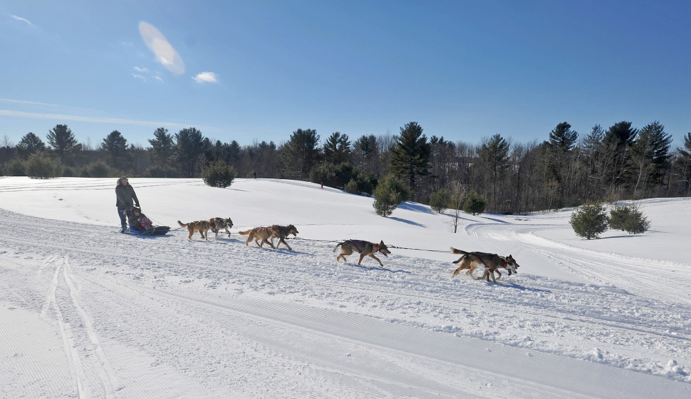 Running in Circles: A dog sled team runs along the trails at Quarry Road Recreational Area in Waterville on Saturday as part of the annual Winter Carnival.