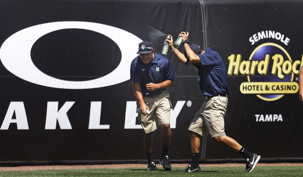 Members of the New York Yankees ground crew combat a swarm of bees that delayed the a spring training game vs. the Boston Red Sox in the third inning at George M. Steinbrenner Field in Tampa, Fla., March 18, 2014.