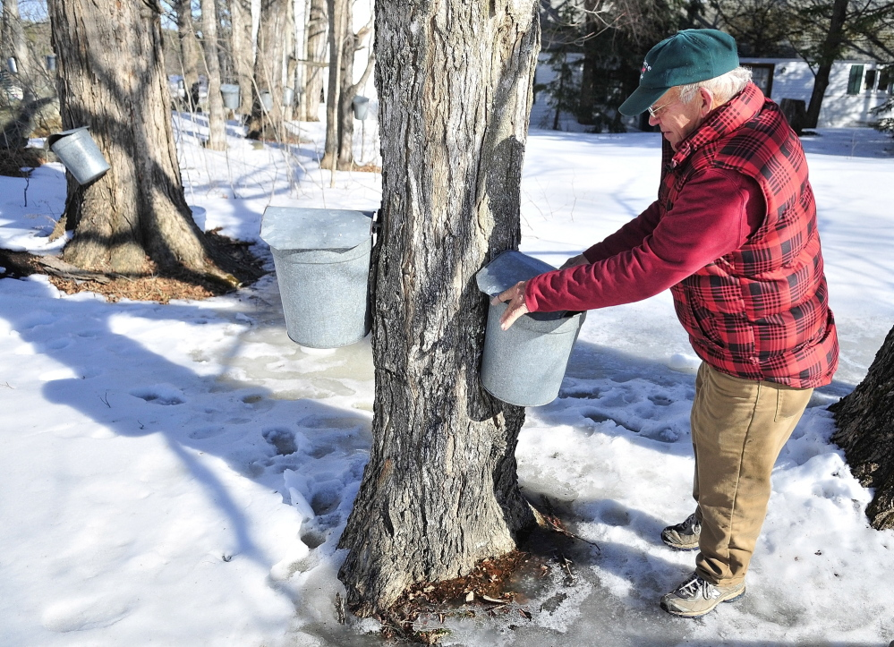 tour: Owner Tim Chase looks at an empty sap bucket during a tour at Tim's Sugar Shack on Tuesday in Whitefield.