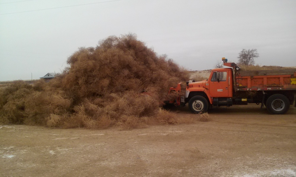 This November 21, 2013 photo shows a pile of tumbleweed piled higher than a snow plow on County Road-R near Ordway, Colo.