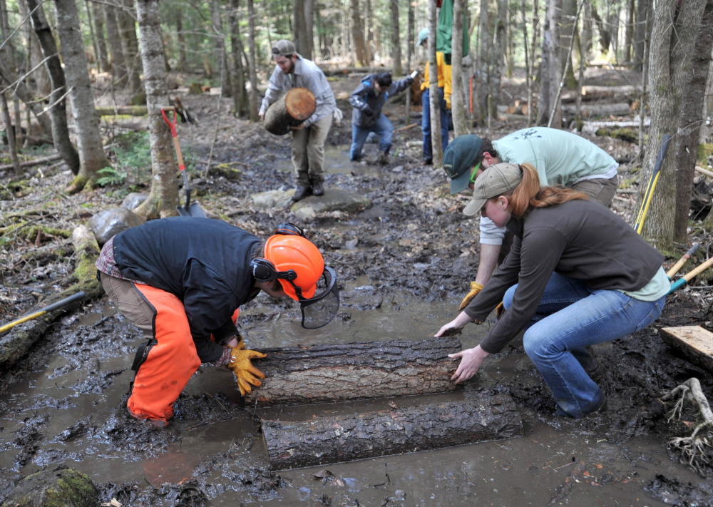 Out of the muck: A Unity College student trail crew builds a bog bridge on the Nature Trail as part of Unity College Community Trail Day on Saturday.