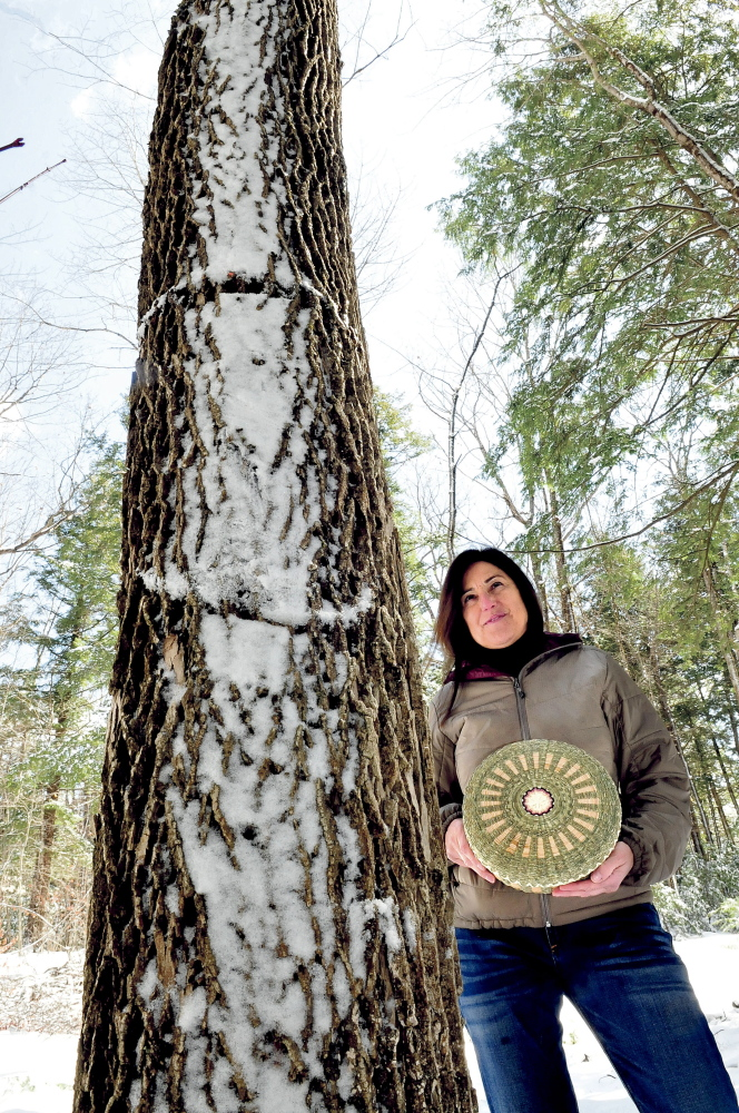 INVASIVE: Theresa Secord, president of the Maine Indian Basket Makers Alliance, holds a basket she made beside a towering ash tree Wednesday in Waterville. Secord is raising concern that the invasive emerald ash borer might devastate ash trees in the state.