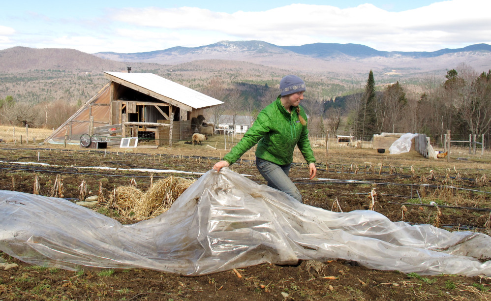 Katie Spring rolls up a plant covering Thursday at the farm in Worcester, Vt., that she and her husband Edge Fuentes own. They both back the GMO labeling bill passed by the Legislature.