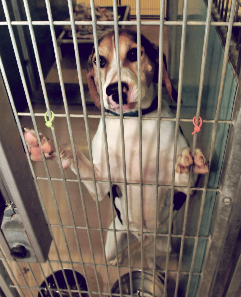 Central Maine Likes Animal Shelter Facebook Pages