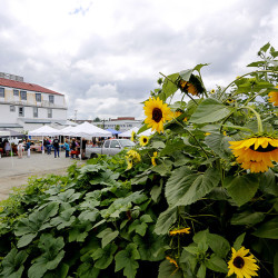 The Skowhegan farmers market which is held at the new Somerset Grist Mill.