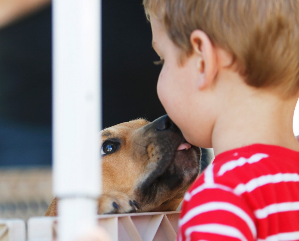 In Adopting A Dog It S Choosing And Being Chosen