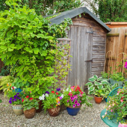 A shed can be a practical and aesthetically pleasing addition to a garden.